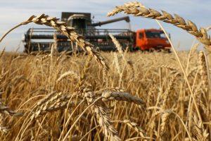 Rusija znatno smanjuje izvoz žitarica