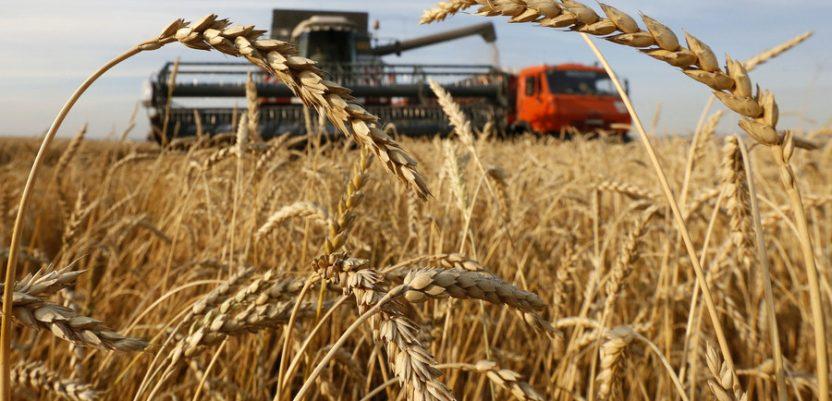 SAD: Rusija preuzima veliko izvozno tržište pšenice