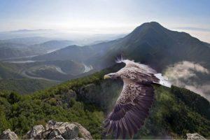 Očuvana priroda rezervata Uvac