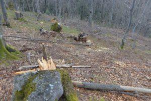 Zbog bespravne seče šume oduzeto ogrevno drvo