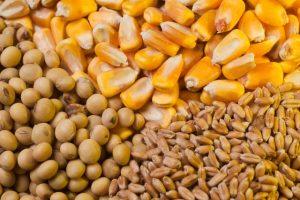 Tržište žitarica u prednovogodišnjem mirovanju