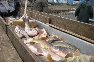 Usklađivanje domaćeg ribarstva sa EU propisima