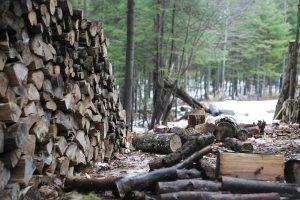 Zbog ilegalne seče godišnje nestane hiljade hektara šuma