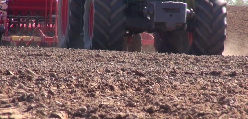 Pšenicu posejati barem na 550.000 hektara