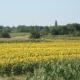 Dugoročni zakup zemljišta: Profiteri i gubitnici