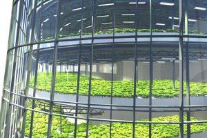Gradi se Svetska prehrambena zgrada