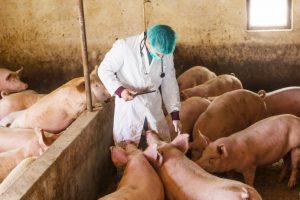 Apel WHO: Ne kljukajte zdrave životinje antibioticima!