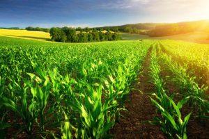 Niš smanjuje porez za poljoprivrednike