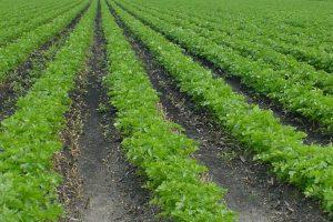 Plodored poljoprivrednicima nije prioritet