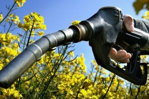 Biodizel loše utiče na klimu?