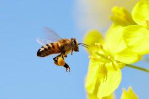 Svet je konačno dobio Dan pčela