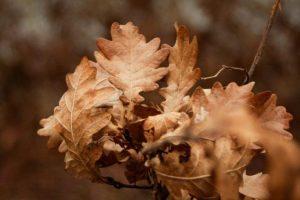 NP Fuška gora apeluje da se ne seče šuma zbog badnjaka