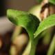 Mogu li biljke da donose odluke?