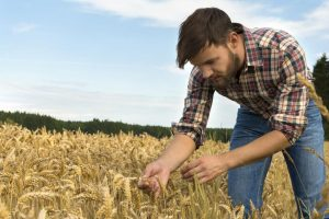 Mladih poljoprivrednika tek 1% više u EU nego u Srbiji