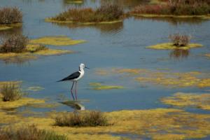 Ribnjak kažnjen za uništavanje gnezda zaštićenih ptica