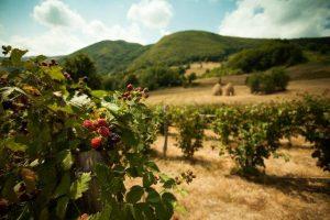 Budućnost ivanjičke poljoprivrede u organskom voćarstvu