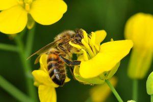Česta upotreba hemijskih sredstava zabrinula pčelare