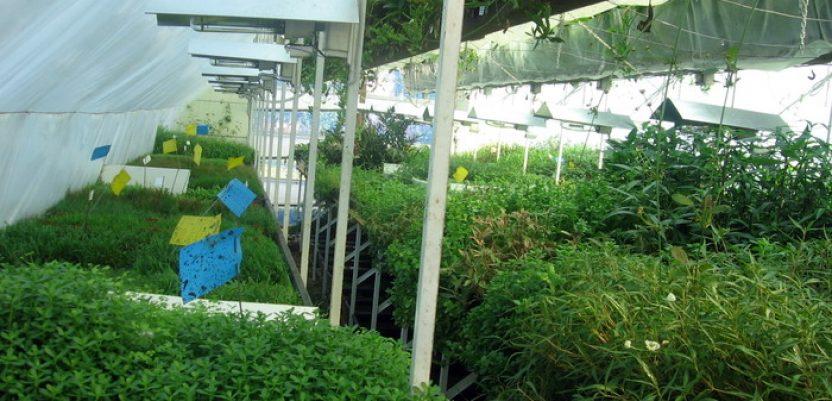 Jedini rasadnik akvarijumskih biljaka u Somboru
