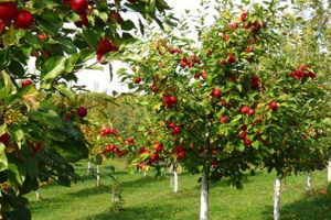 Bespovratna sredstva za beogradske poljoprivrednike
