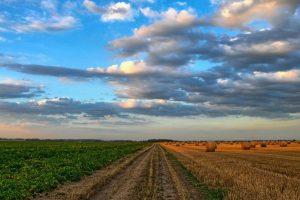 Almex ore hiljade hektara, a otima od ratara