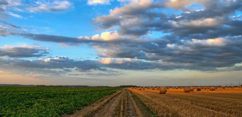 Velika trojka zakupljuje 13.800 hektara državnih oranica
