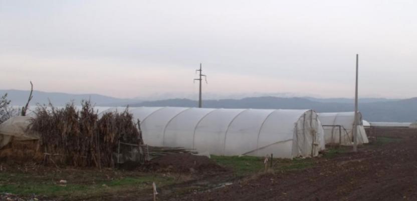 Štete na poljoprivrednim usevima u Leskovcu
