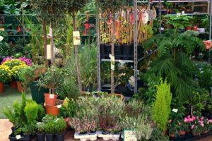 Beogradski sajam će uskoro biti cvetna i biljna oaza