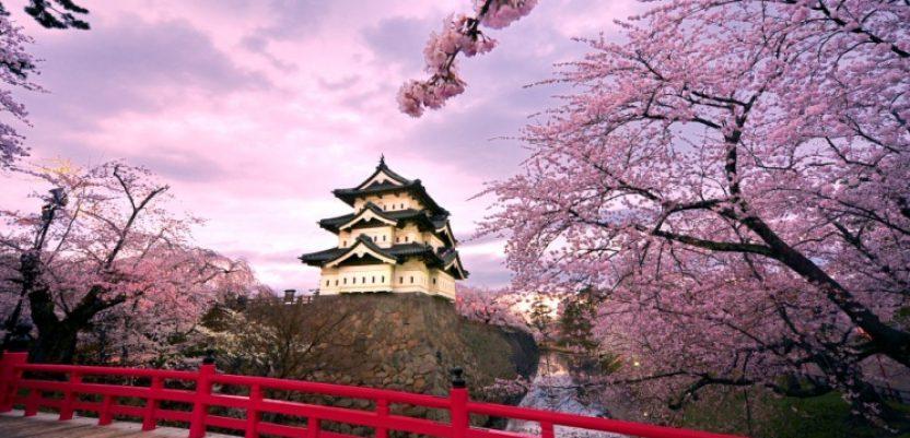 Cvetanje japanske trešnje ove godine počelo ranije