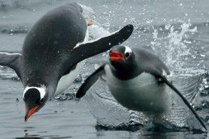 Na Antarktiku otkrivena kolonija od milion i po pingvina