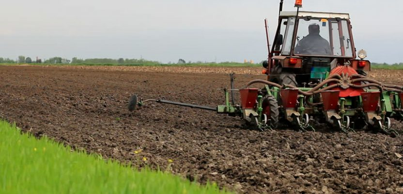 Rast cena žitarica povećao interesovanje ratara za setvu