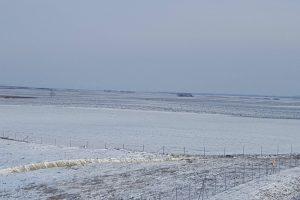 Pšenica na severu Banata u lošem stanju