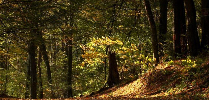 Danas je Dan zaštite prirode Srbije
