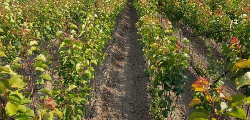 Uprava za šume poklanja sadnice