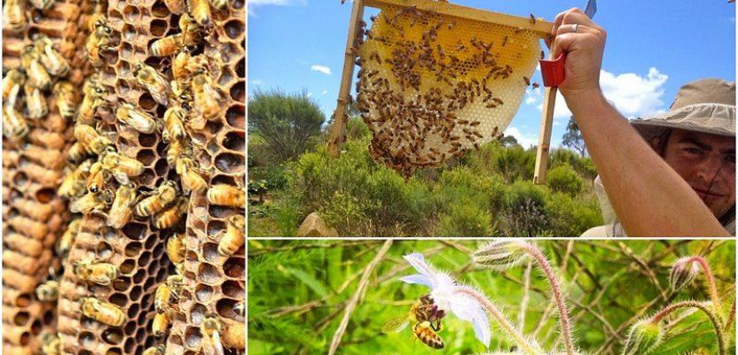 Da li je moguće proizvesti organski med?