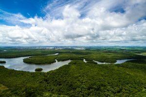 Neobična prošlost Amazonije