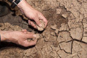Nemački poljoprivrednici žale se zbog suše i vukova