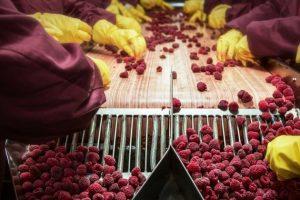 Podrška prerađivačima voća i povrća