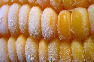 Listerija vreba iz zamrznutog kukuruza