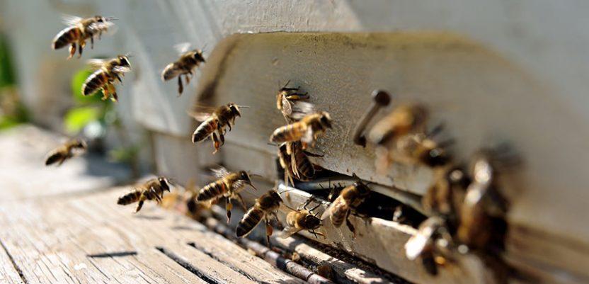 BeeConnected, šansa za potencijalne pčelare