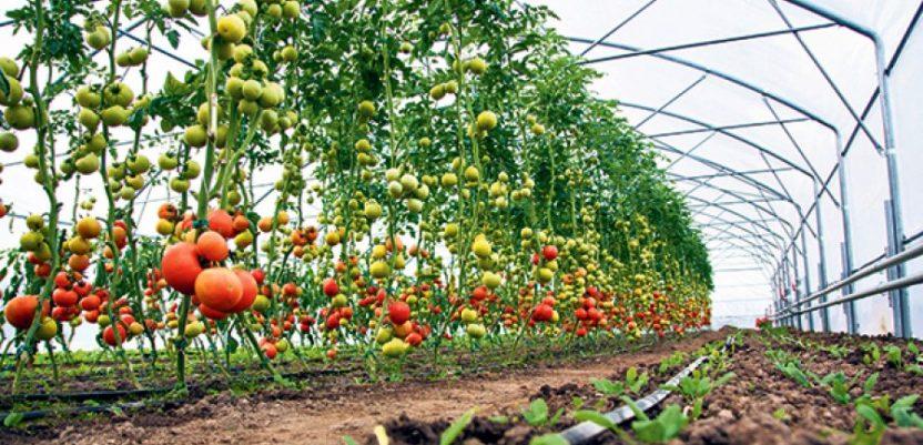 Savetovanje o savremenoj proizvodnji povrća 14. februara