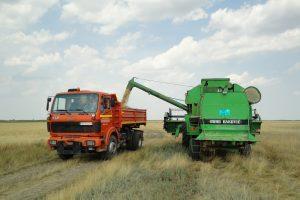 Opština prodala žito sa uzurpiranih njiva