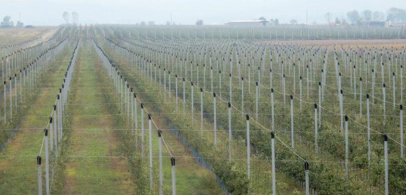 Plantaža voća na aerodromu u Bojniku