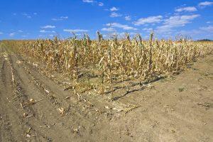 Nemačka: Poreski obveznici plaćaju za sušu