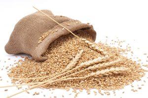 Žitounija traži ukidanje carine na uvoz pšenice poboljšivača