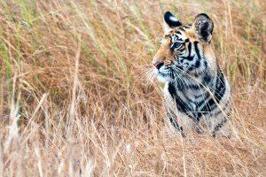 WWF: Zemlja izgubila 60 odsto divljih životinja