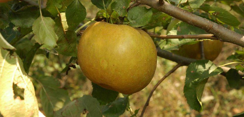 Banka semena na njivama i u voćnjacima