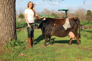 Raste potražnja za mini kravama