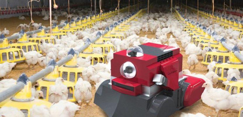 Roboti za efikasniju živinarsku proizvodnju
