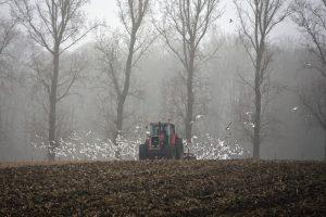 Opet kasne licitacije državnog poljoprivrednog zemljišta