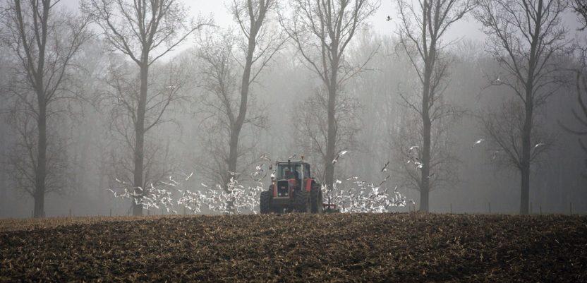 Uskoro na licitaciji 584 hektara državnog zemljišta